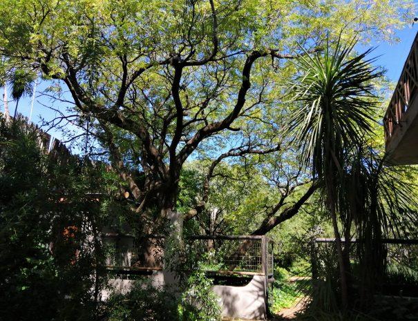 arbre feuille palmier