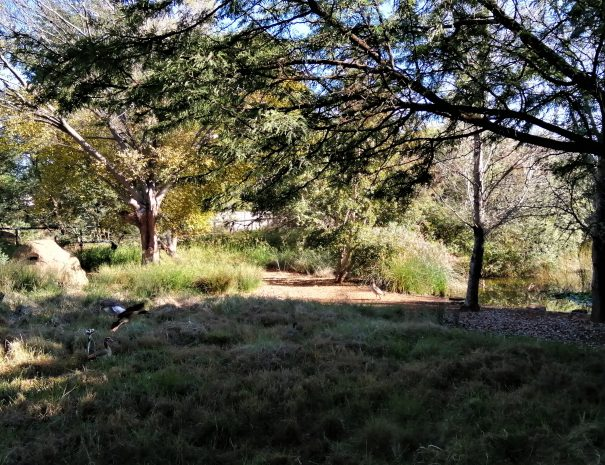 bush végétation