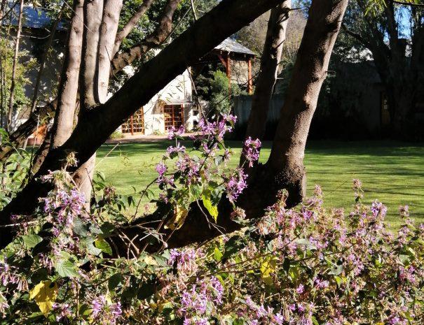 arbre feuille fleur